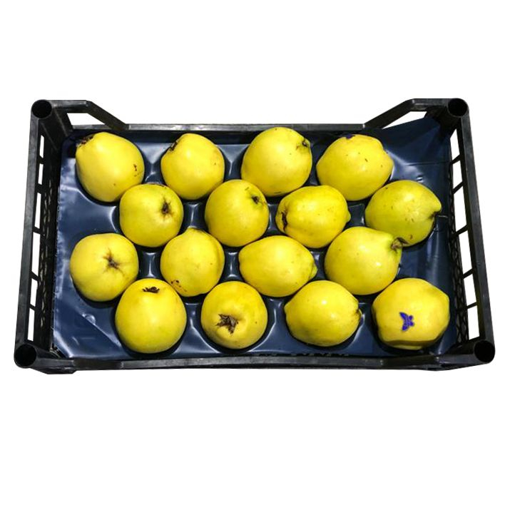 Quince 3.8Kg-4Kg (UAE Delivery Only)